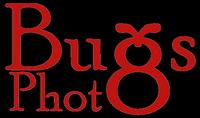 Logo - Photo Bugs